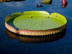千葉市川【クオーレ・カラー】ヤング・リヴィングアロマ体験講座、チャネリング曼荼羅カードリーディング