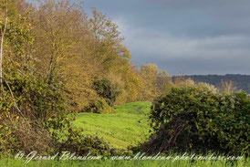 A l'orée du bois de Boissy Photo Gerard BLONDEAU