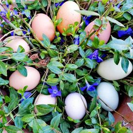 Viele bunte Eier inmitten blauer Blümchen