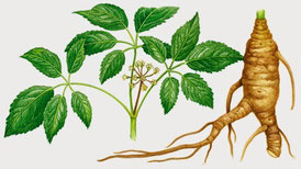 Ginseng per perdere peso
