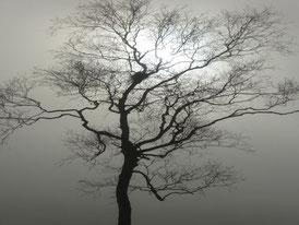 Nebelstimmung im Federseemoor (Bild: Kerstin Wernicke)