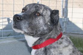 ZED – Herzenshund wartet auf eigene Familie