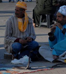 Ici à Marrakech. Ce malheureux cobra est certainement mort maintenant, arraché à son biotope pour être exhibé au mépris de toute considération de respect des espèces sauvages @Michel Aymerich