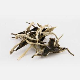 Foto, Moonlight White, weißer Tee aus Yunnan in China