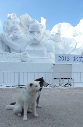 2015年 さっぽろ雪祭り会場にて。たろうとだいちゃんです。  スターウォーズ エピソード ワンワン?!(笑