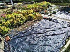 夏の花の撤去が進む公園花壇(手前は、雑草侵入防止の防草(ぼうそう)シート(現在、土づくり中))