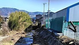 田村橋の上流の竹林(左奥)