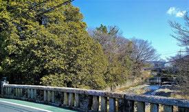 下流の紅葉橋付近の川辺林。この中には市指定の保護樹木が6本含まれています。