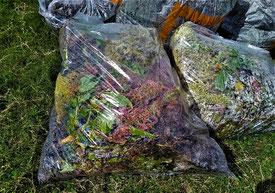 ごみ袋(ボランティア用)に入れられた、夏花壇のお花たち(共に古井戸公園。10/7撮影)