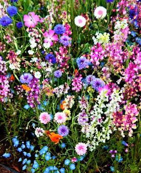 たねダンゴ方式で花束のように咲いたお花