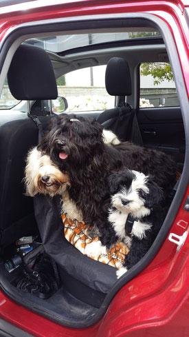 Der große Abholtag - 1. Mai 2015 - Lisha auf dem Weg ins neue Heim