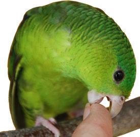 Toucher ou morsure de perroquet ?