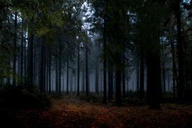 Wald im Nebel am Velmerstot