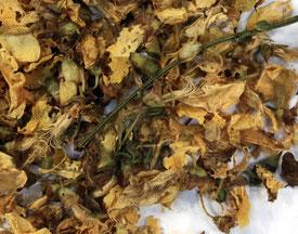 Fleurs de genêt séchées