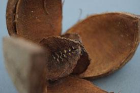 Trockenfrüchte zum Dekorieren, Zapfen zum Drechseln und Basteln