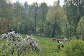 Die Frühjahrsweide