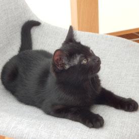 catsitting petsitting visite et garde de chat Paris Asnières