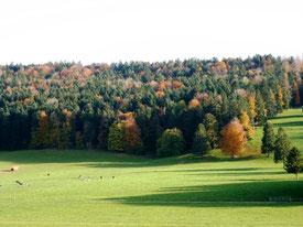 Wälder und Ruhe im Urlaub, in den Ferien