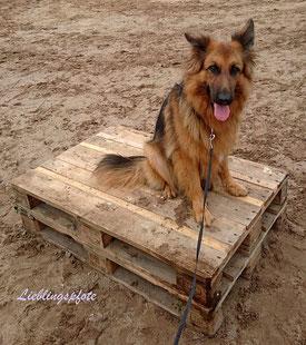 Podest Fur Pferde Bodentraining Diy Lieblingspfote Rund Um Hund