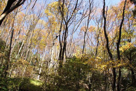 広葉樹林が広がっています