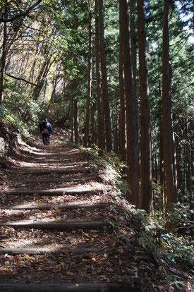 木漏れ日を浴び…黙々と歩きます。この辺りは、傾斜路も比較的歩きやすく整備されています。