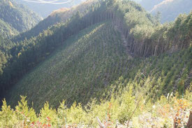 峠からは、きれいに植林された斜面を見ることができます。あらためて感じることですが、きつい傾斜角です。