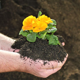Pflanzhumus, Blumenerde, Pflanzerde, Erde