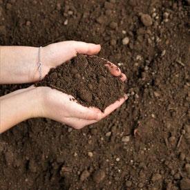 Humus, Mutterboden, Muttererde, Erde