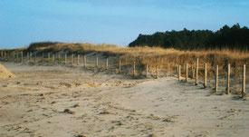 Cuxhaven, Sandstrände und Küstenheide