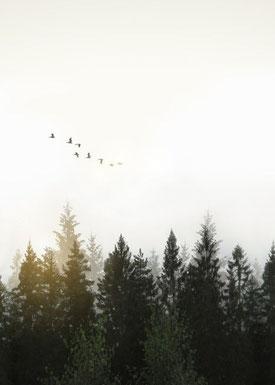 nature bois oiseaux