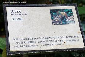 京都府立植物園の説明より