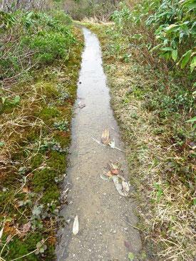 ▲雪解け水で登山道が小川状態