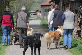 In großen Gruppen Gassi gehen macht Spaß - der Kurs Body-Nose-Brain fördert Harmonie und Gruppengefühl