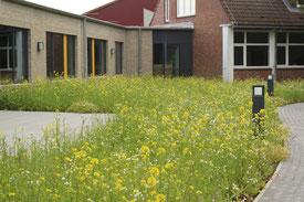 Mensa-Garten im Juli 2020. Bild: Wissel/LKN.SH