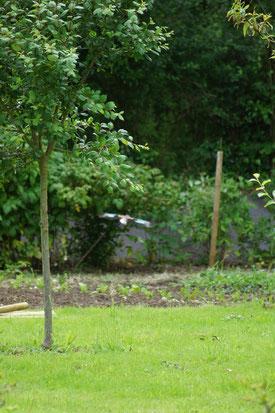 Un geai visite souvent le jardin.