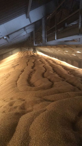 grano almacenado tratado contra las plagas
