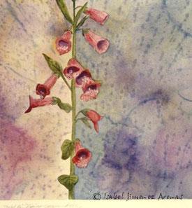 Plantas medicinales. Acuarela, 20 x 20 cm, 1994. Colección privada.