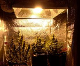 Lichtundurchlässigkeit Growbox
