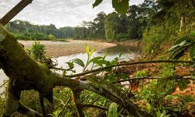 El Parque Nacional Madidi en Bolivia es una de las áreas protegidas menos impactadas. / Rob Wallace/WCS