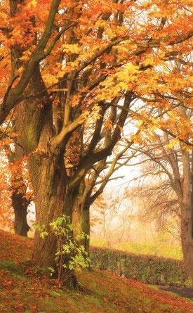 unser Parkfriedhof im Herbst