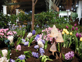 An Exhibit of Spring Bulbs at the 2015 Show