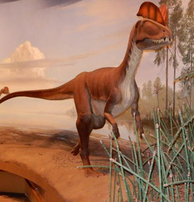 Dilophosaurus is Believed to be Our Dinosaur