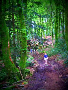 ... En forêt de Bibracte, Morvan.