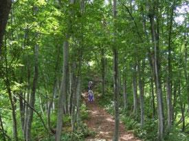 魚沼のブナ林(新潟県のWebサイト)