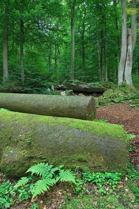 Riesige Sandsteinsäulen mitten im Wald