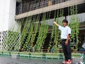 篠山東雲高校のグリーンカーテン