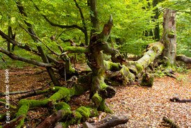 Der Urwald bietet bisweilen bizarre Baumstrukturen