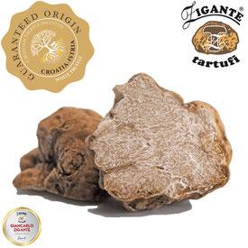 Die trüffelsaison in Istrien mit der empfehlenswerten Trüffelmesse Zigante Truffle Days