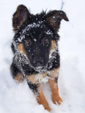 Schnee-Wölfchen <3