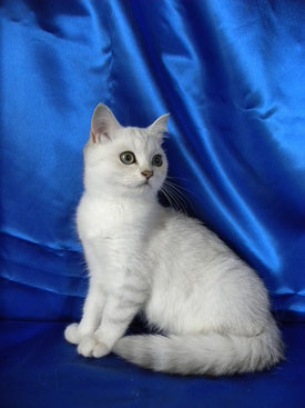 Sissy, 18 Wochen alt (Foto: 11.7.2015)